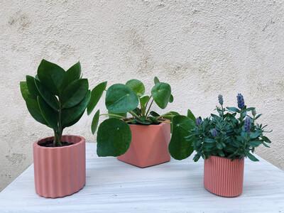 House Raccoon | Mila pot with plant zamioculcas zamiifolia - Pomegranate red (plant included!) 6cm