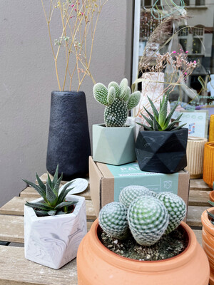 House Raccoon | Olive Green Mare pot with Opuntia microdasys albispina cactus (plant included!) 6cm