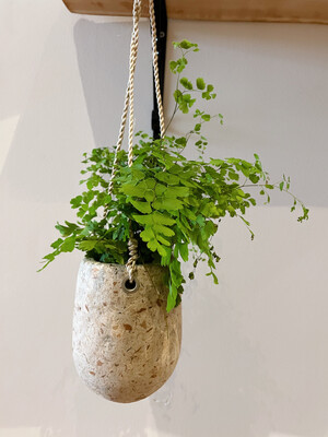 Kinta | Hanging pot with fern plant - Upcycled paper and wood pulp - plant included