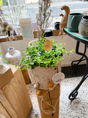 Kinta | Hanging pot big 17cm with pearls and Plant Peperomia Rotundifolia - Upcycled paper and wood pulp - plant included