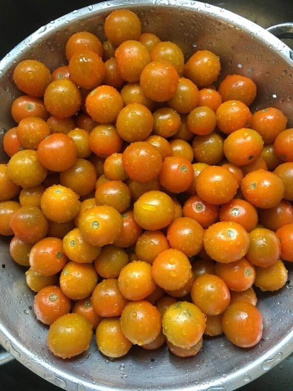 Sungold Tomato Plant 4