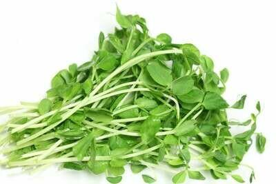 Pea Shoot Microgreens - Vitruvian Farms