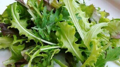 Baby Leaf Salad Greens - Vitruvian Farms