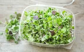 Micro-Mix Microgreens - Vitruvian Farms