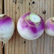 Storage Turnips (2 lb) - Vitruvian Farms