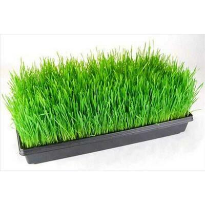 Wheatgrass - Vitruvian Farms