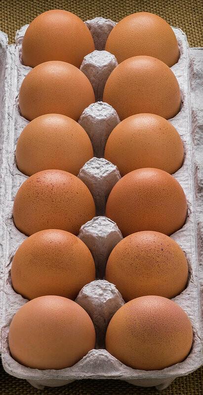 Eggs (Dozen) - OrgaNick Pastures