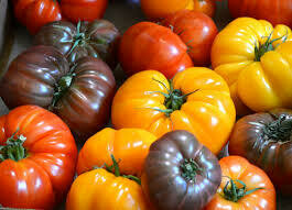 Heirloom Tomatoes - Vitruvian Farms