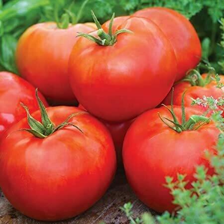 Red Slicing Tomatoes (lb) - Vitruvian Farms