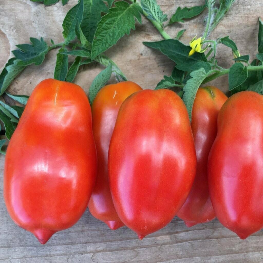 San Marzano (Roma) Tomatoes (lb) - Vitruvian Farms