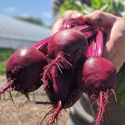 Beets (2lb) - Vitruvian Farms