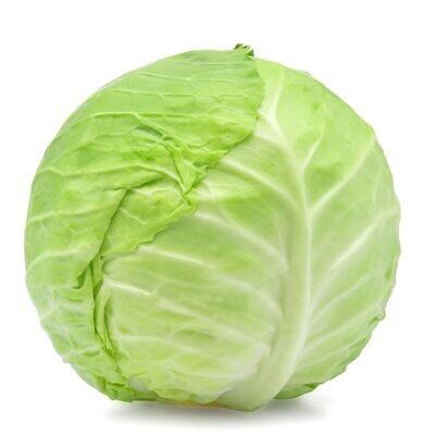 Green Cabbage - Vitruvian Farms