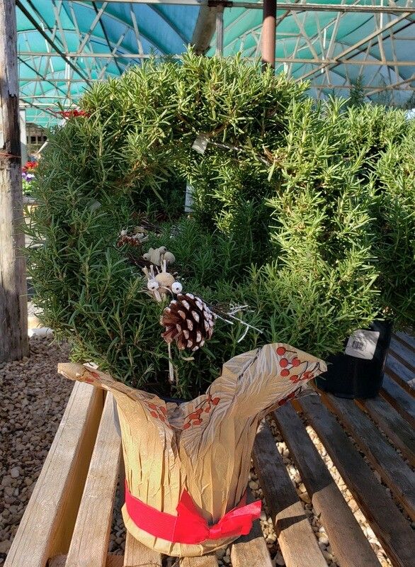 Rosemary Wreath  1 Gallon