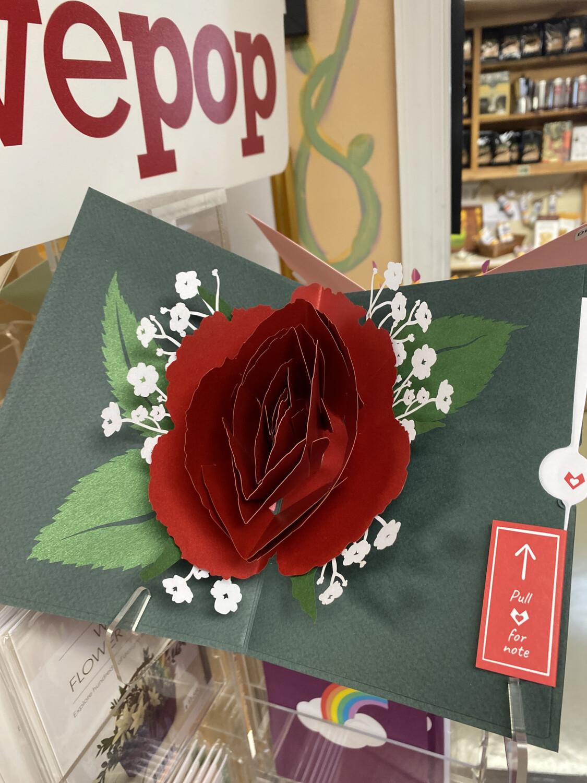 Love Pop Red Rose Bloom