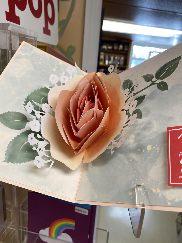 Love Pop Peach Rose Bloom