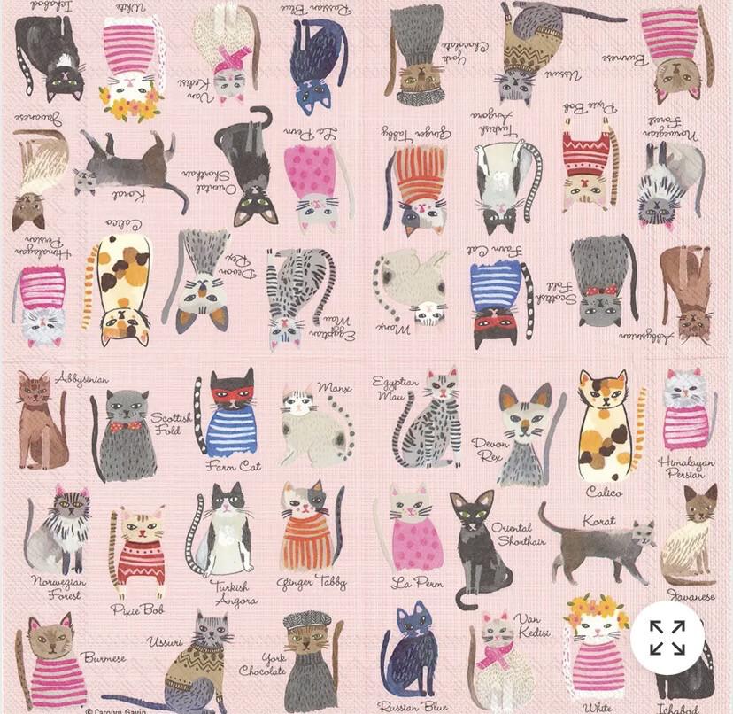 BI Cool Cats Napkins