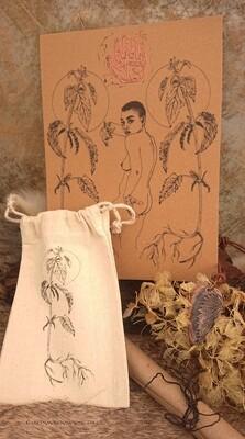 Nettle - Plant Spirit Bundle