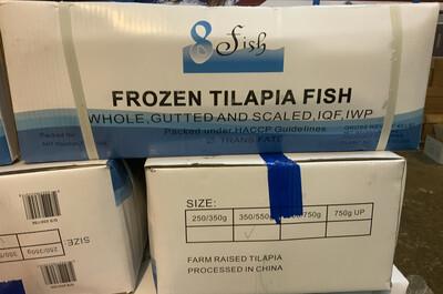 TILAPIA MOJARRA WHOLE FISH 40 POUND CASE