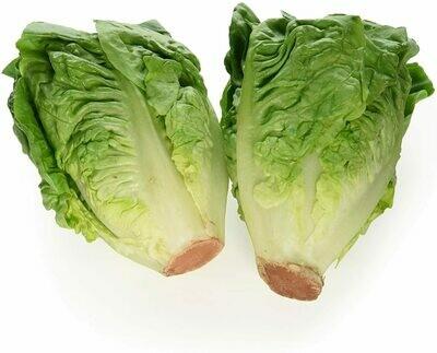 1 Pack Little Gem Lettuce