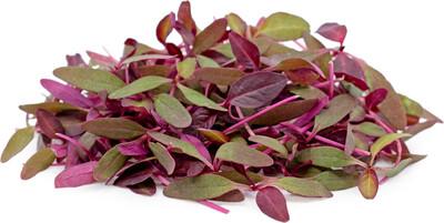 30g Micro Herbs
