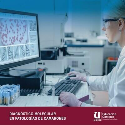 Diagnóstico Molecular en Patología de Camarones