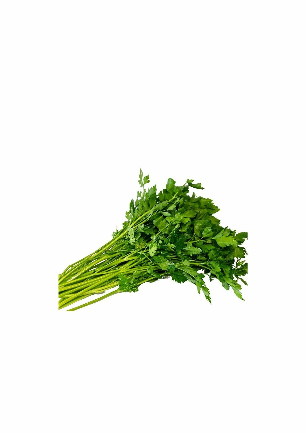 PARSLEY CONTINENTAL (BUNCH)