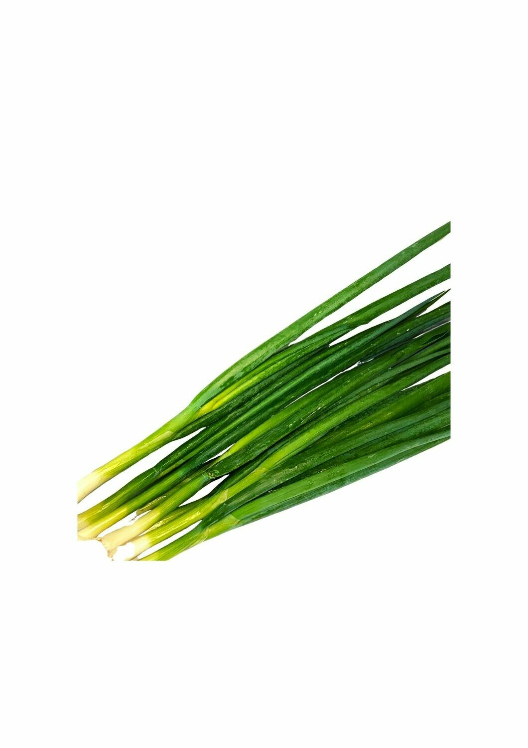 SPRING ONION (BUNCH)
