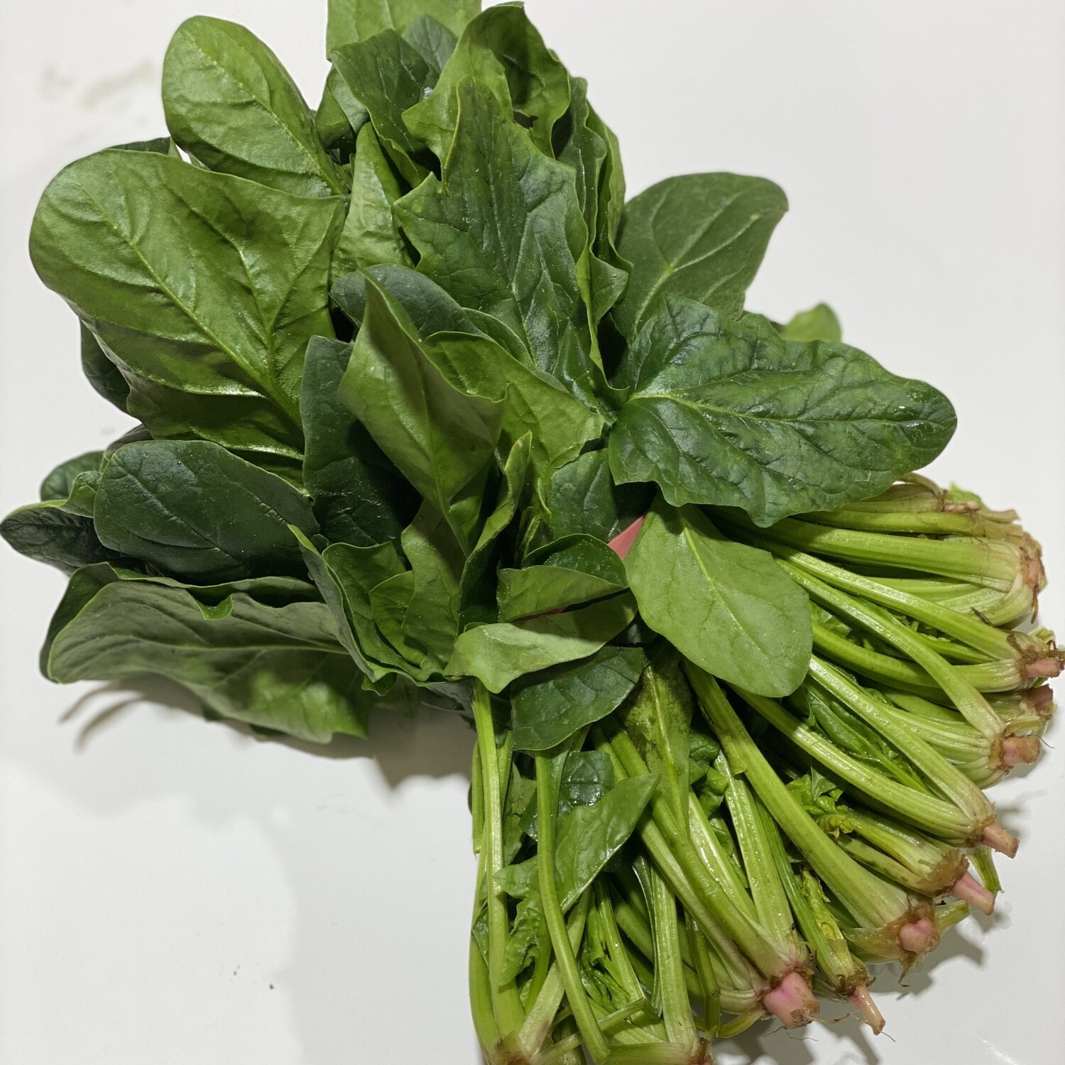 SPINACH (ENGLISH) BUNCH