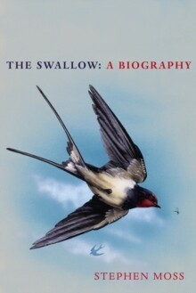 Swallow, The
