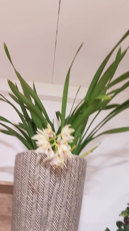 Orchidée blanche cascade