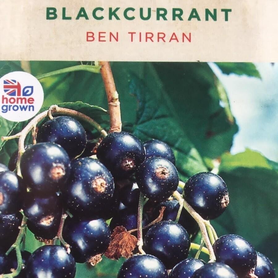 Blackcurrant Ben Tirran 3L