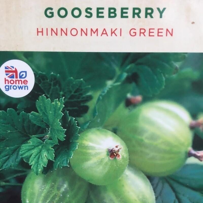 Gooseberry Hinnonmaki Green 3L