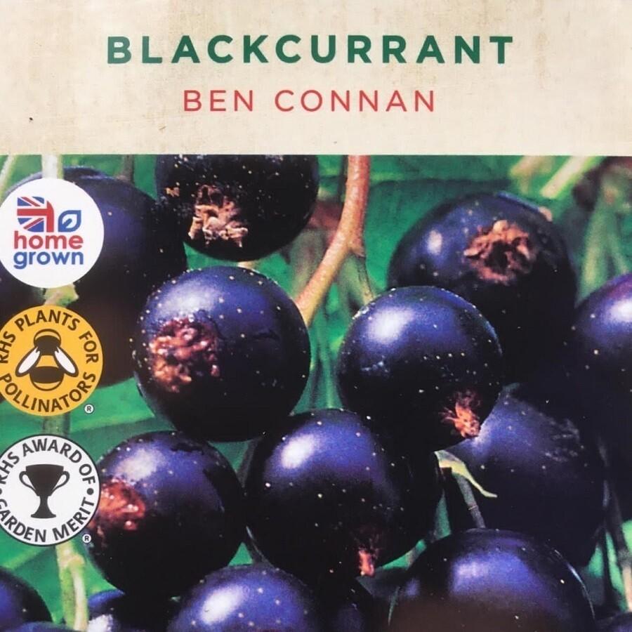 Blackcurrant Ben Connan 3L