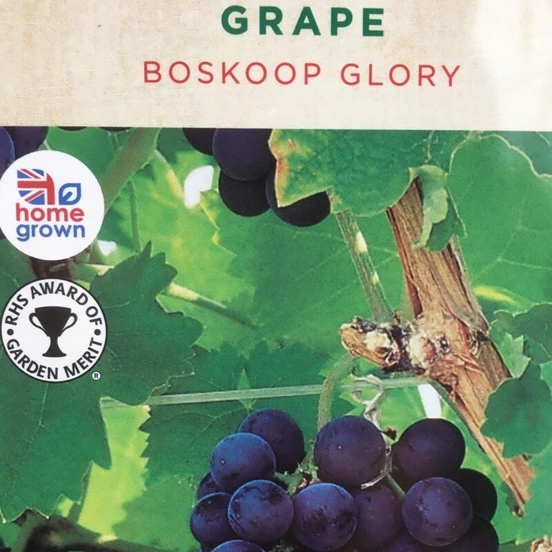Grape Boskoop Glory 3L