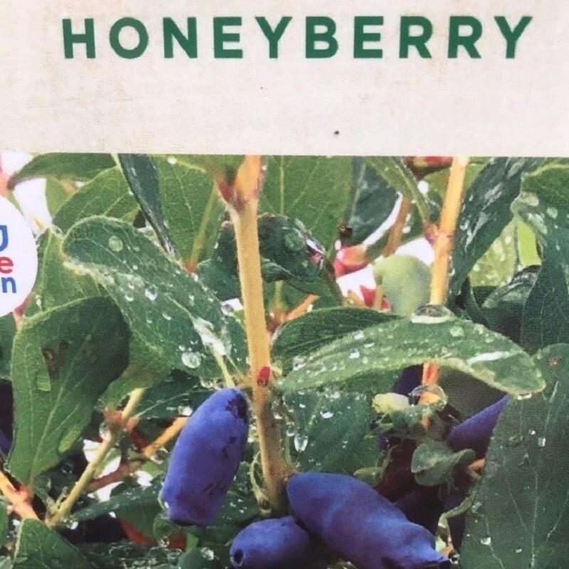 Honeyberry Blue Banana 3L