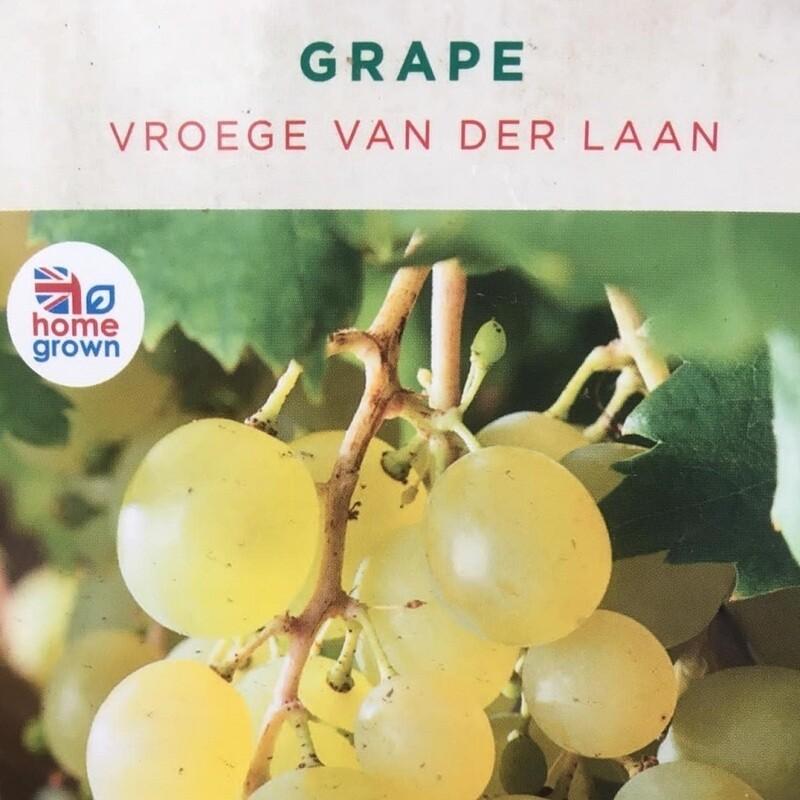 Grape Vroege Van Der Laan 3L
