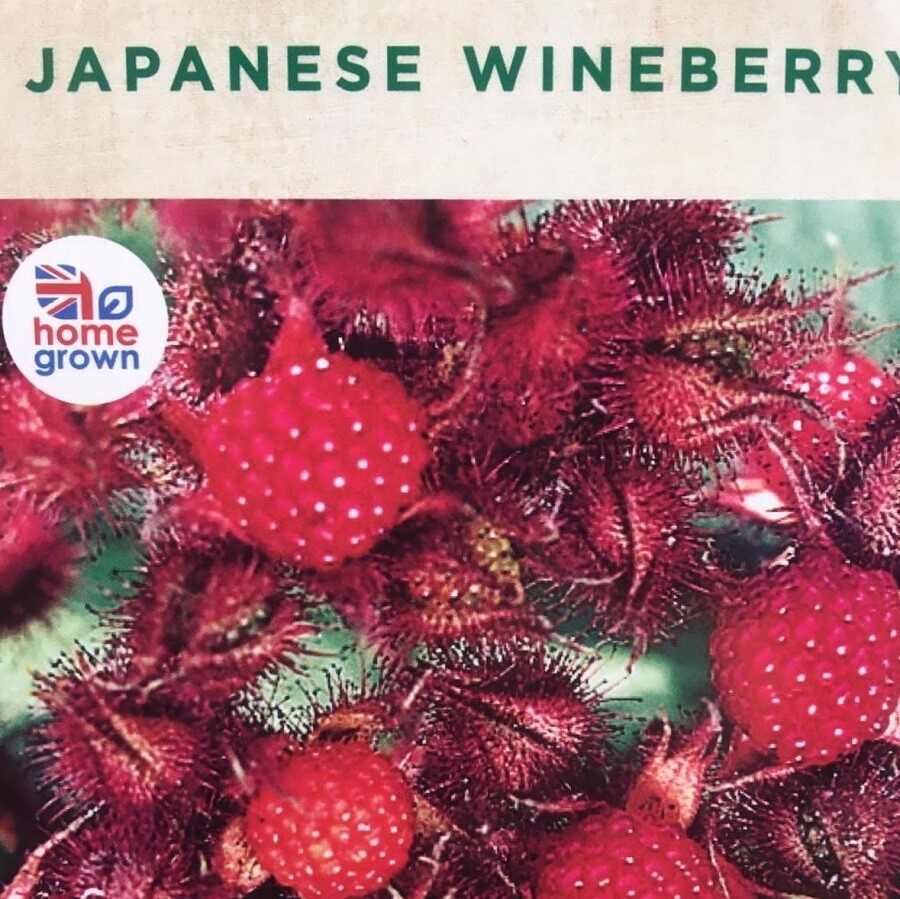 Japanese Wineberry 3L