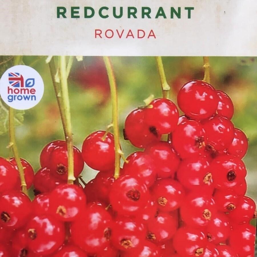 Redcurrant Rovada 3L