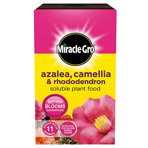 Miracle Gro Azalea, Camellia & Rhododendron Feed. 1kg