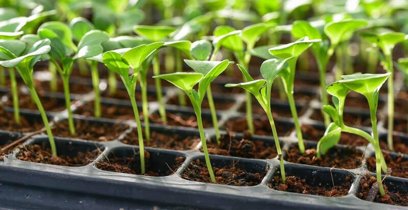 Seed Growing Tray