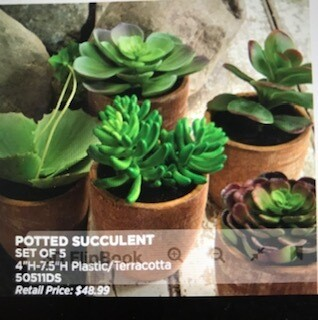 """Home decor by Melrose/set of 5 succulent plants/4"""" to 7.5"""""""
