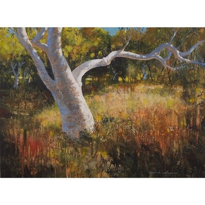 David Hooper - River Gum