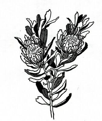 Tina Hall Art + Design - Leucospermum lino print