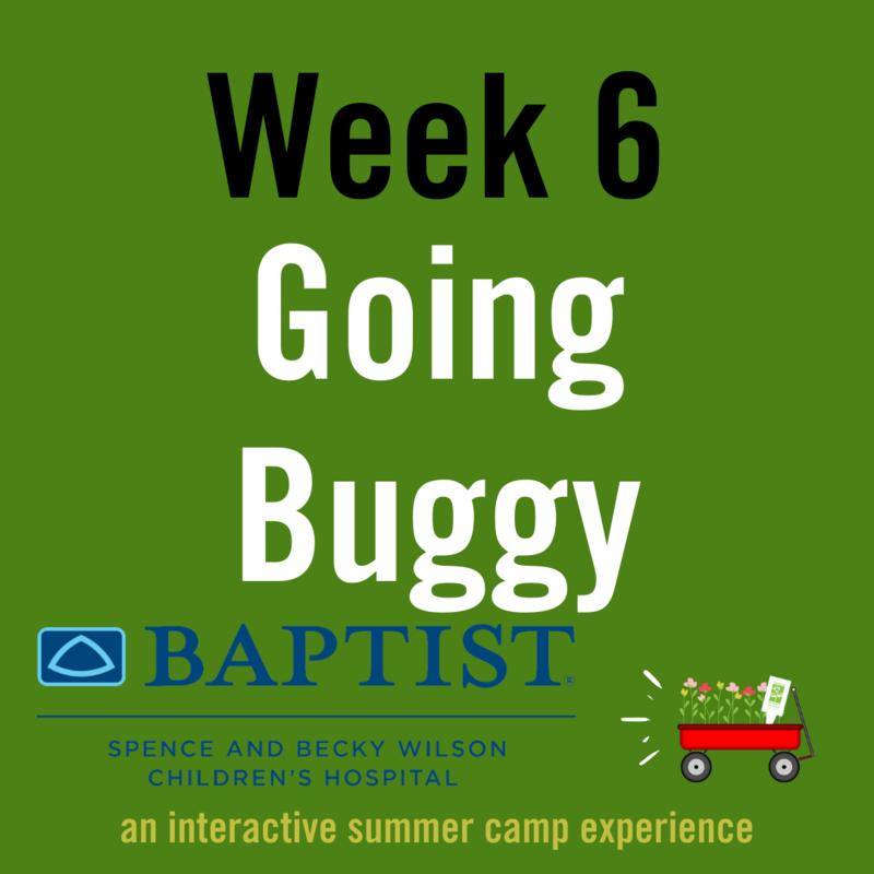 Going Buggy (Week 6)