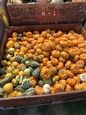 Mini Gourds