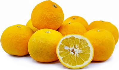 Seville Oranges (LB)