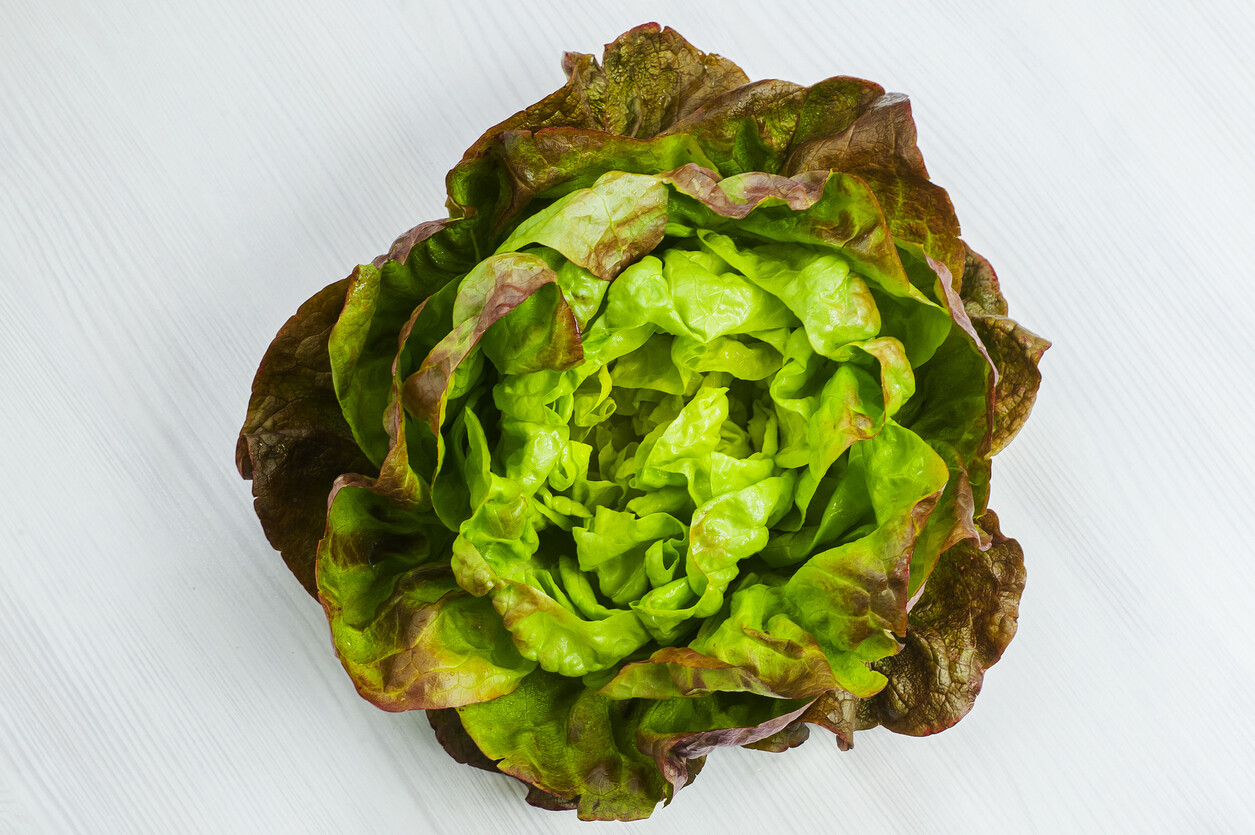 Red Buttercrunch Lettuce