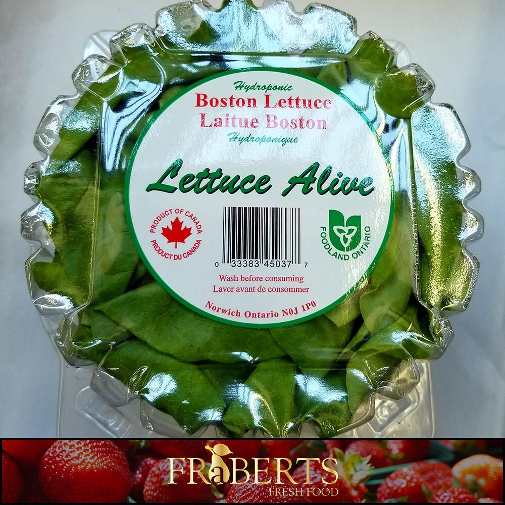 Boston Lettuce (clam)