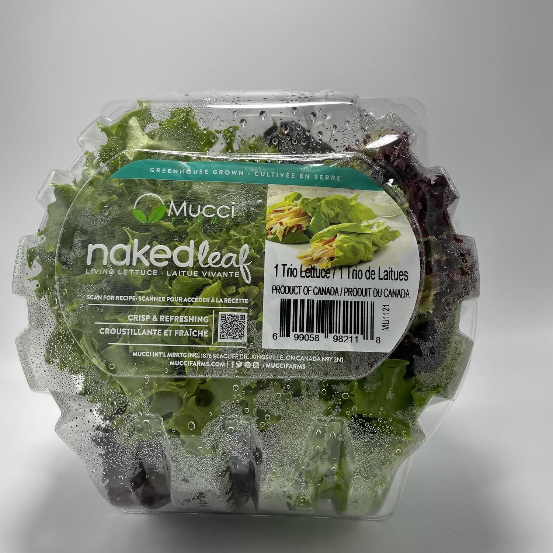 Trio Lettuce - Naked Leaf - Mucci