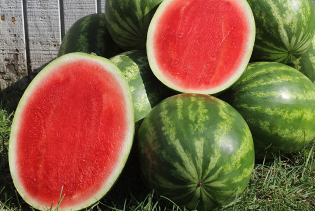 Watermelon - Red Seedless